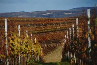 Vychutnejte si na podzim svěží svatomartinská vína