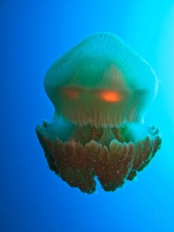 Čtyřhranka smrtelná, Zdroj: Shutterstock