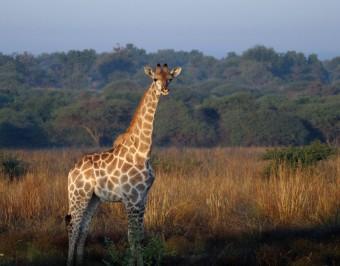 Mziki safari, zdroj: Flickr, autor: Rob Pughsley