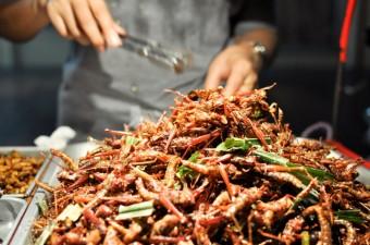Hmyz jako běžné jídlo, foto: Dreamstime.com