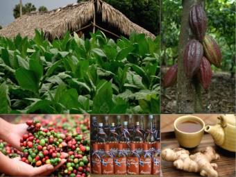 Cestování za zážitky: chutě a vůně Dominikánské republiky