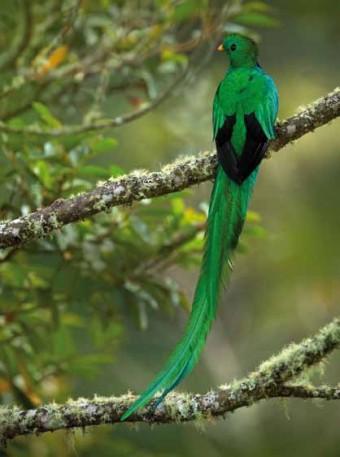 Savegre Mountain Lodge, Kostarika, foto: Ondřej Prosický