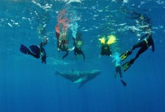 Pozorování velryb Samaná, Silver Bank, foto zdroj: Národní turistický úřad Dominikánské republiky