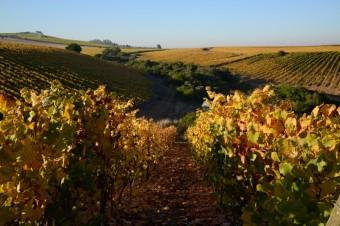 Vinice Viña Leyda, foto: Premier Wines & Spirits