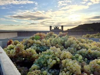 Hrozny Murrieta, foto: Premier Wines & Spirits