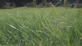 Žlutý trávník v parném horku se dá zachránit, TV Bydlení