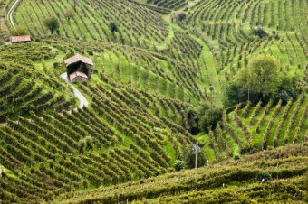 Nalaďte se na šumivou vlnu prosecca, foto zdroj: Shutterstock